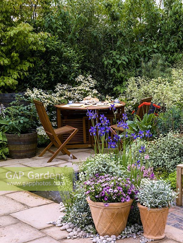 Quiet corner with table set for tea by hydrangea. Sunken pool and fountain edged in iris, dogwood foliage and pots of gazania and diascia. Left: Tomato in barrel.