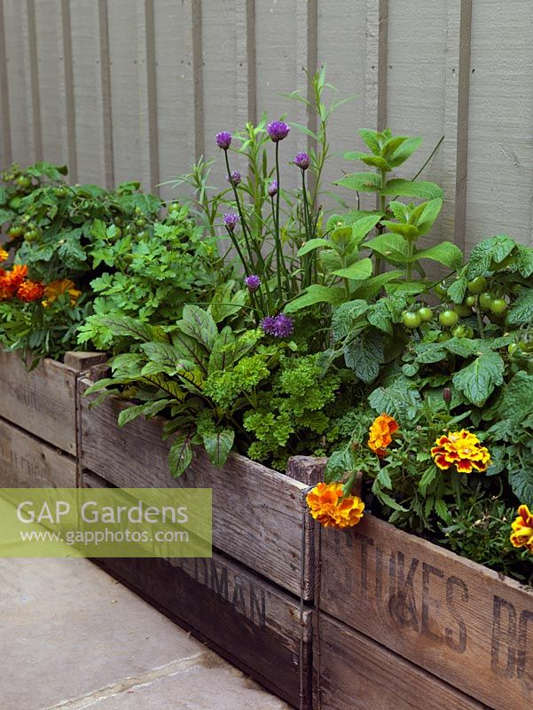 A small raised vegetable and herb bed made from recycled crates.