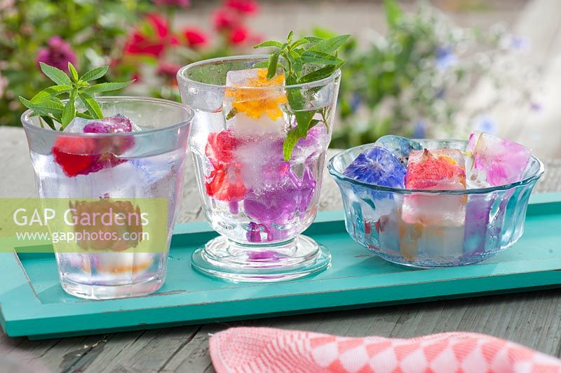 Edible flowers frozen in ice cubes garnished with lemon verbena