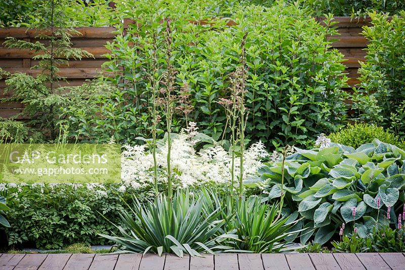Modern Summer Garden Border Setup By Astilbe Hosta Jucca And Hydrangea Paniculata As A