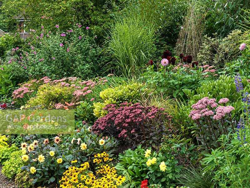 GAP Gardens - Hot bed with Sedum \'Purple Emperor\', Sedum \'spectabile ...