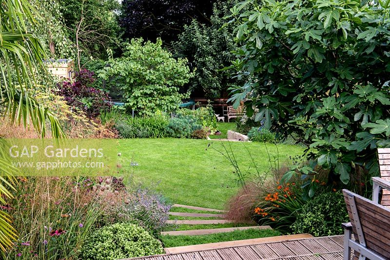 View from a wooden deck down a terraced split level garden. Planting includes Dechampsia Bronzeschlier, Echinacea Double Pink Delight
