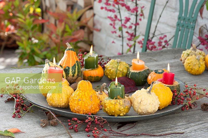 Tray with candles and Cucurbita as wreath on metal plate, five pumpkins as candle holders