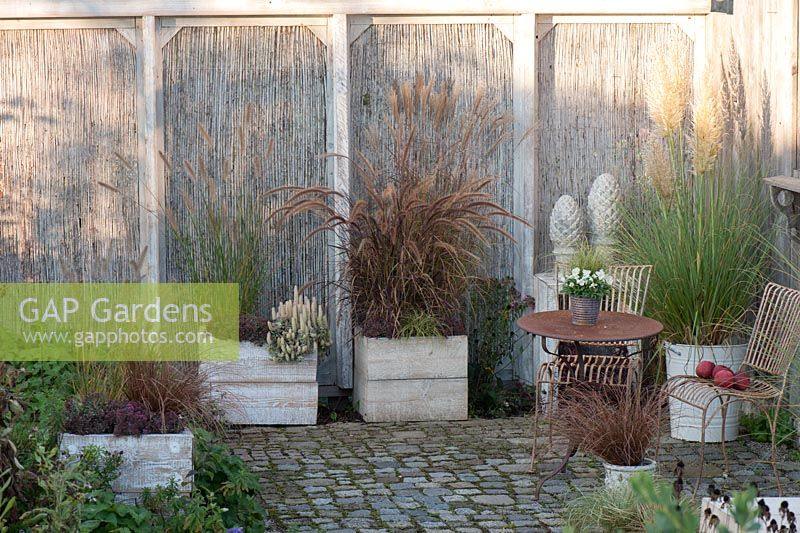 Patio With Screen Panels Pennisetum Miscanthus Carex Sedum Orostachys Chinese Dunce