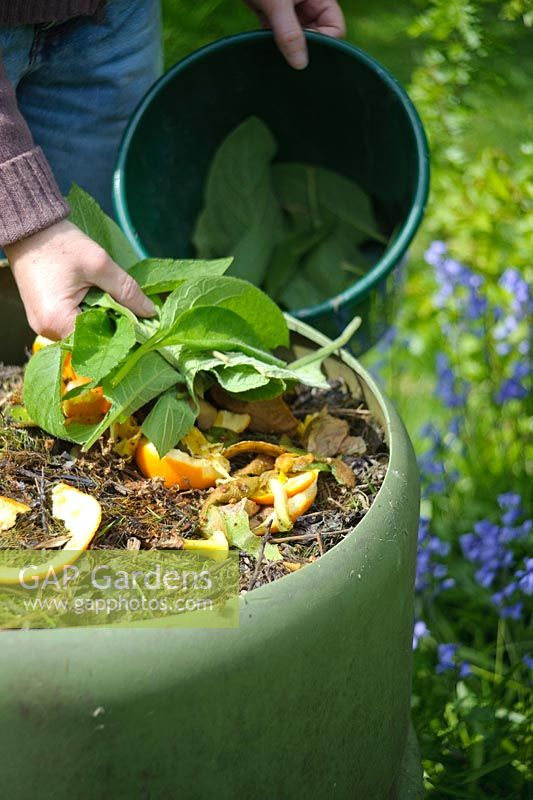 Adding comfrey leaves to compost