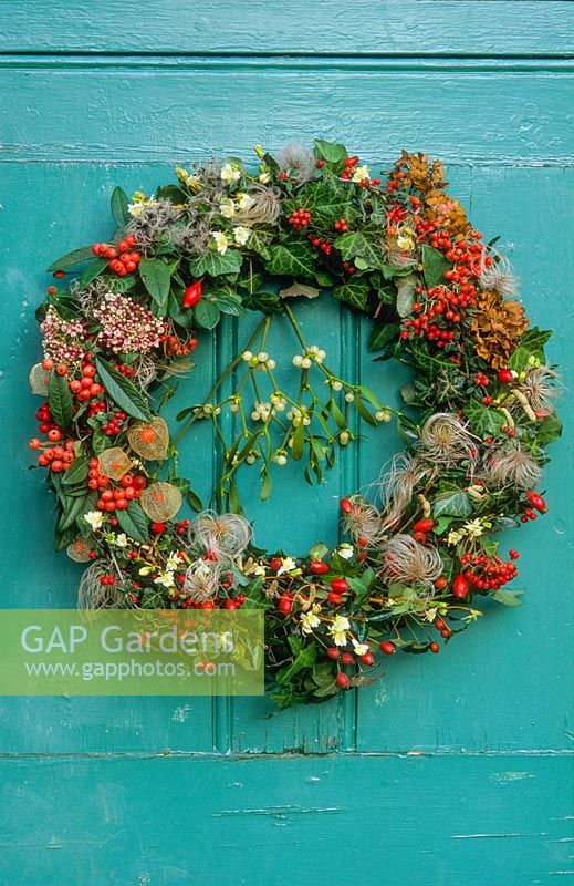 Christmas wreath. Hedera helix foliage, Berries from Cotoneaster lidjiangensis, Cotoneaster 'Heaslands Coral', Physalis alkekengi, Rosa rubiginosa and Viscum album. Flowers from Lonicera fragrantissima and Viburnum tinus. Seedheads from Clematis macropetala, Clematis vitalba and Hydrangea macropetala.
