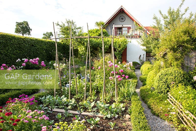 Enclosed by a hornbeam hedge, rural garden with mixed plantings of flowers and vegetables in box edged patches, box spheres and a rustic fence line gravel path