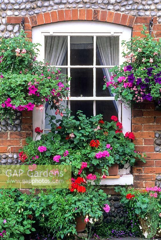 Group of containers around cottage window. Cley-next-the-Sea, Norfolk. July