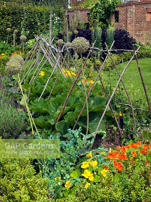 A newly planted potager bed, with plant supports in place, containing Courgette 'Tondo di Nizza', 'Lungo Fiorento' and 'Patty Pan' with Nasturtium, Allium, Cerinthe and Lavandula.