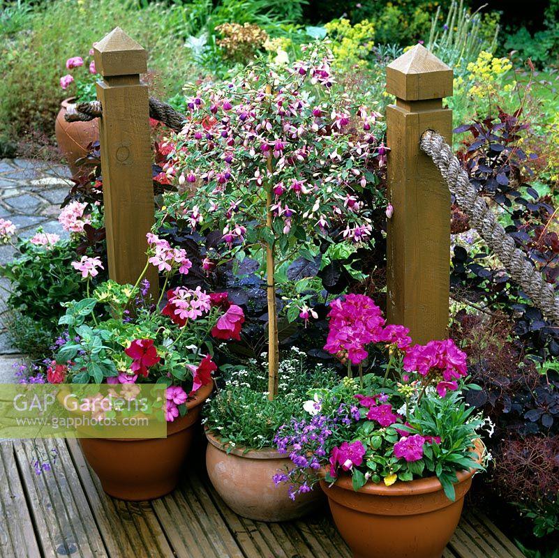 Gap Gardens On Corner Of Deck Terracotta Pots Of Pelargonium Petunia Lobelia Geranium And