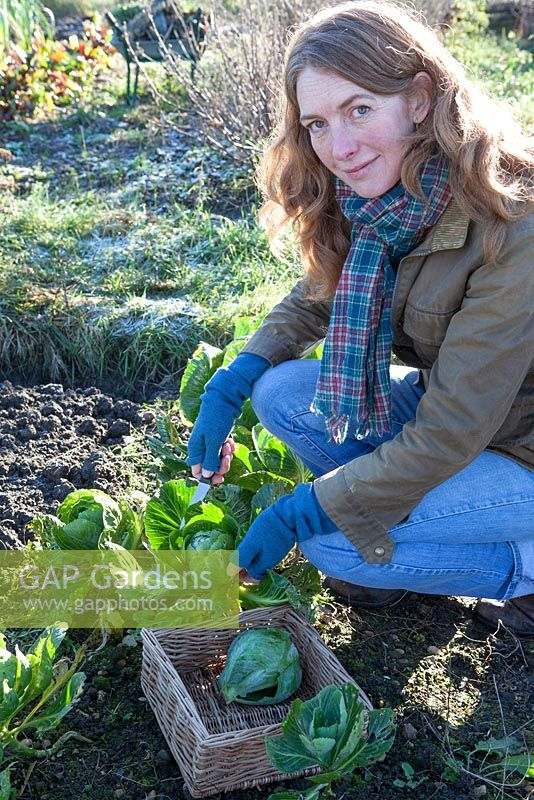 Woman cutting winter greens on vegetable patch in winter