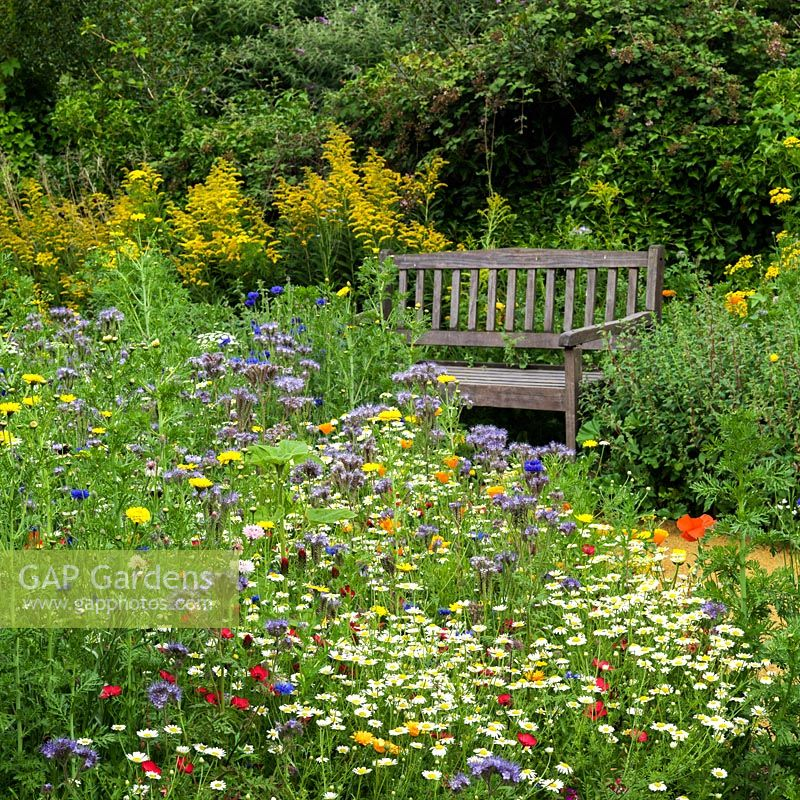 Annual wildflower meadow and wooden bench
