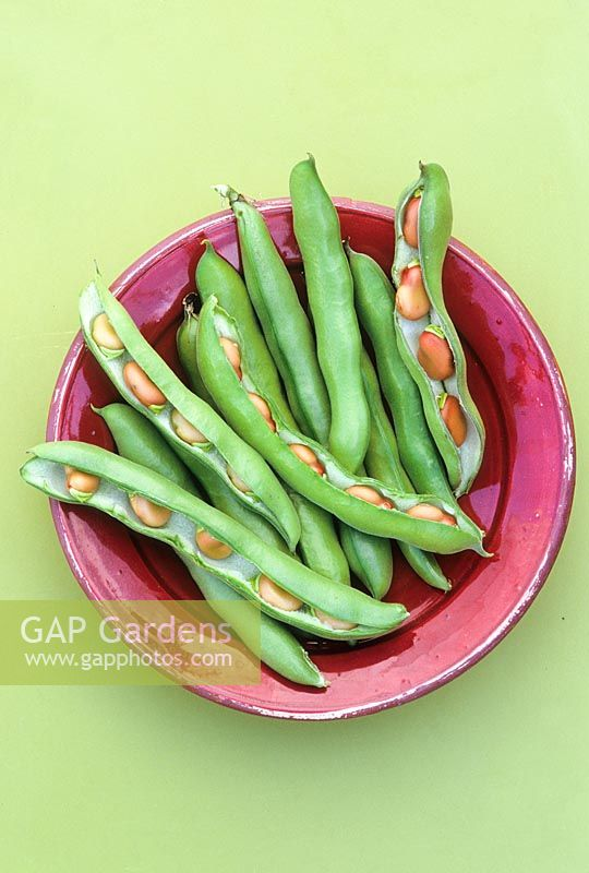 Broad bean 'Red Epicure' on a plate