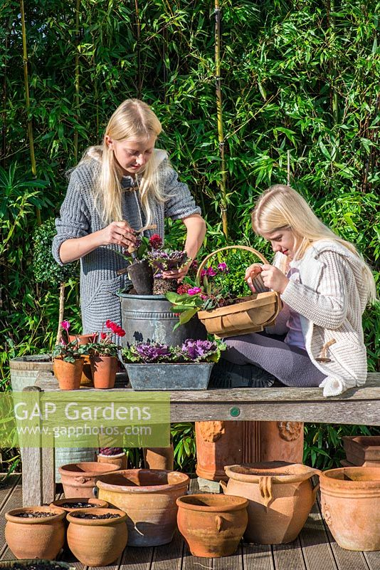 On a wooden deck edged in bamboo, two girls plant up a winter container with red cyclamen, purple ornamental cabbages, annual violas and Skimmia japonica 'Rubella'.