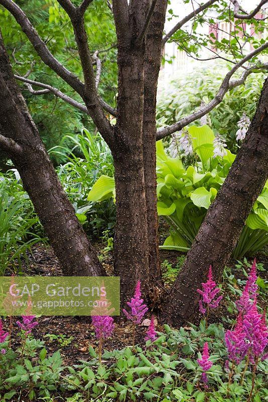 Planting Under Deciduous Trees : Home image categories plants a