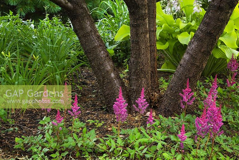 Planting Under Deciduous Trees : Vision in red flowers hosta sun power plants under deciduous tree