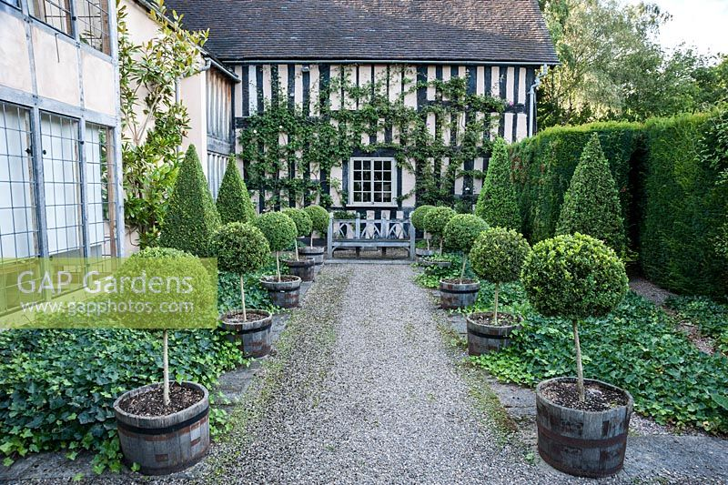 Awesome Courtyard Beside House With Clipped Box Topiary And Ground Cover Ivy.  Wollerton Old Hall,
