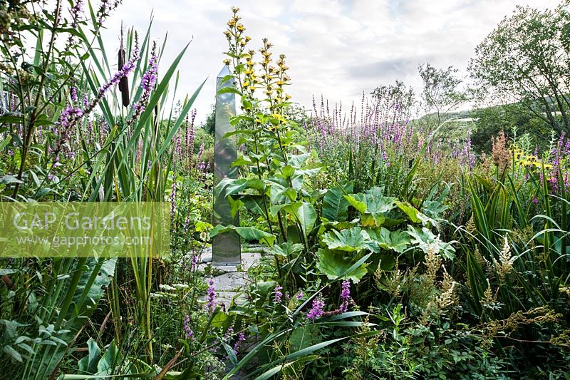 Metal obelisk in the bog garden is surrounded by yellow Inula afghanica, purple loosestrife, petasites and bullrushes. Dyffryn Fernant, Fishguard, Pembrokeshire, Wales, UK