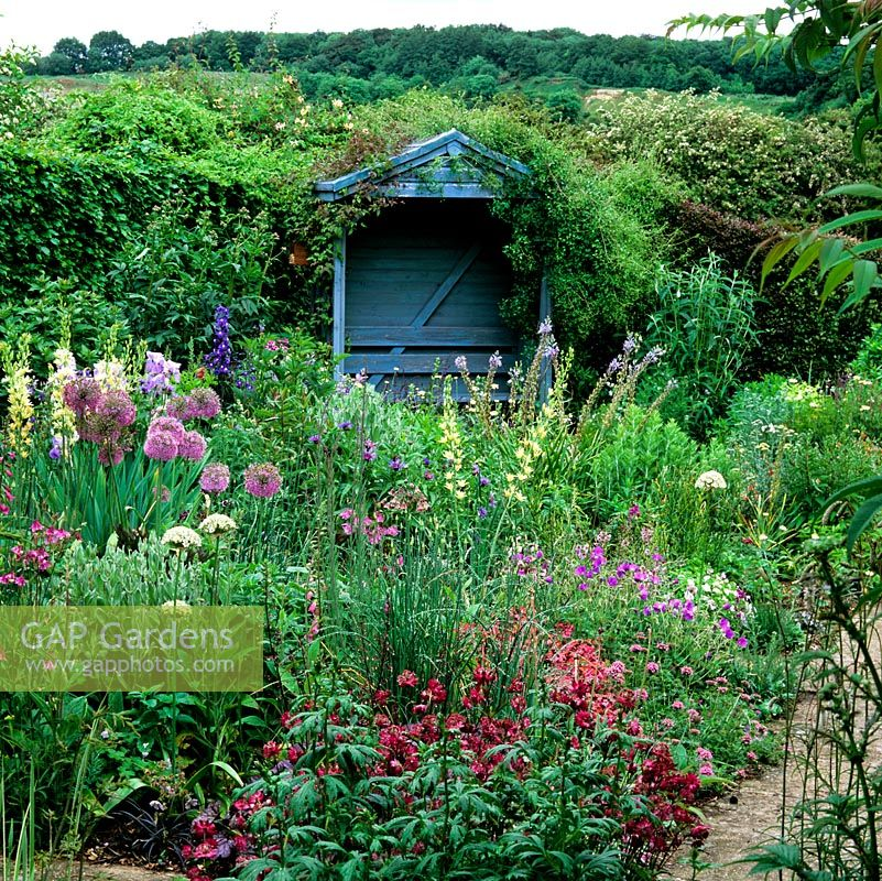 GAP Gardens - Informal herbaceous planting with Astrantia major Ruby ...