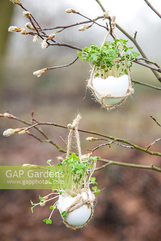 Egg Shell Cress hanging in a rustic string satchel.