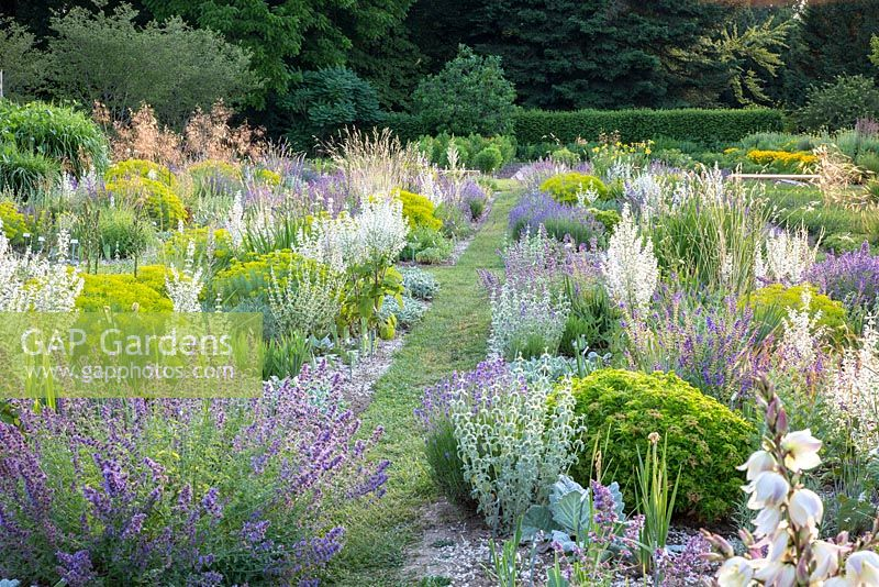 In the iris borders at Weihenstephan Trial Garden a selection of drought resistant perennials and grasses including Euphorbia polychroma, Euphorbia seguieriana subsp. niciciana, Marrubium, Salvia sclarea 'Vatican White' and Stipa gigantea
