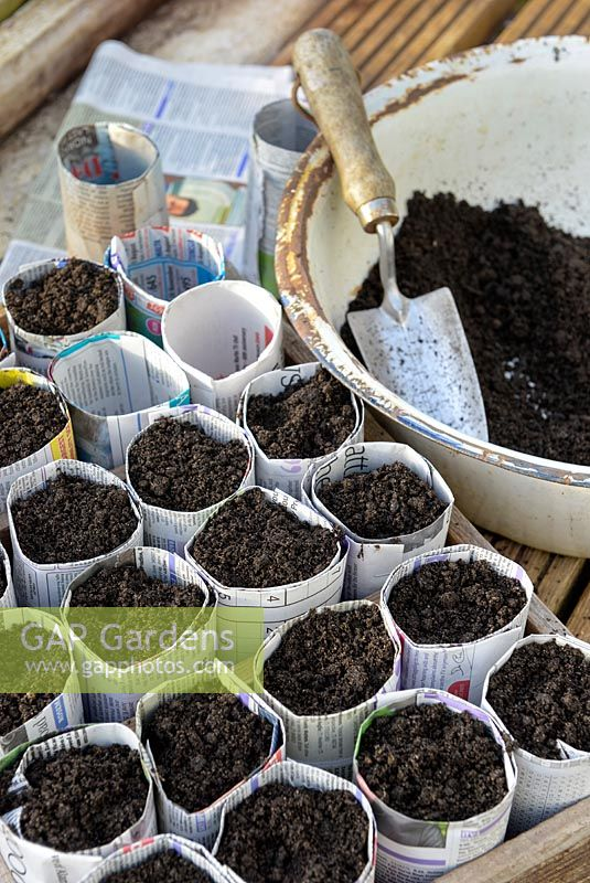 Filling seed sowing pots made from newspaper with compost.