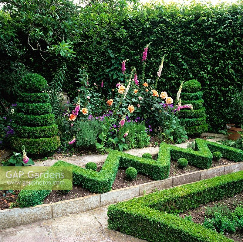 Box hedge zig-zag and balls forms structure on bank to stop earth washing down. Behind, bed of foxgloves, hardy geranium and Rosa 'Just Joey' flanked by broad box spirals.