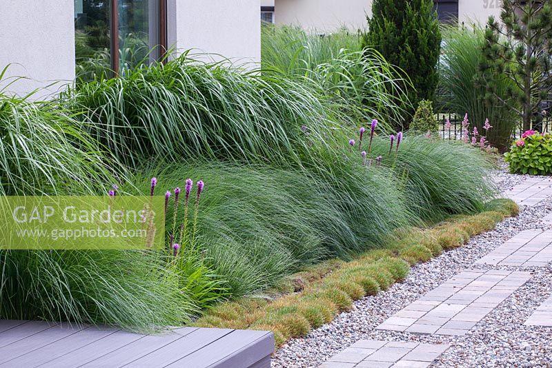 Gap gardens ornamental grass border planted with for Ornamental grass border