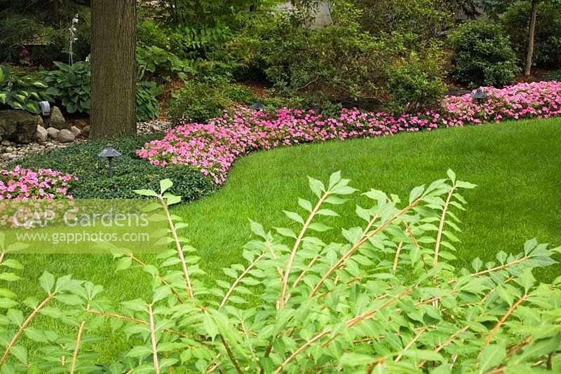 Gap gardens manicured green grass lawn and beds of pink for Green plants for flower beds