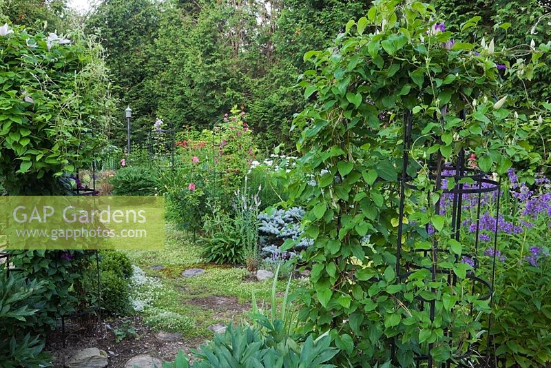 gap gardens black wrought iron obelisk with clematis. Black Bedroom Furniture Sets. Home Design Ideas