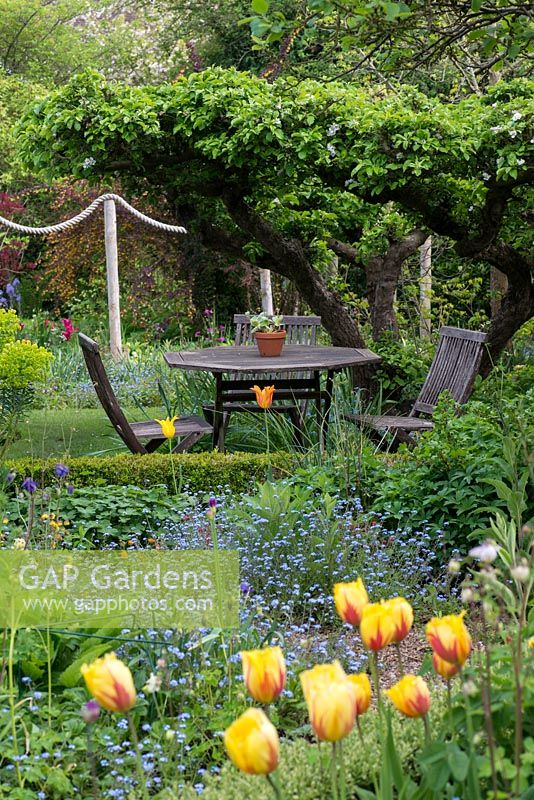 An old apple tree creates a natural canopy over a table and chairs, in a secluded corner. Seen over beds of tulips, geums, euphorbia and forget-me-nots. Behind, rope swag creates a division