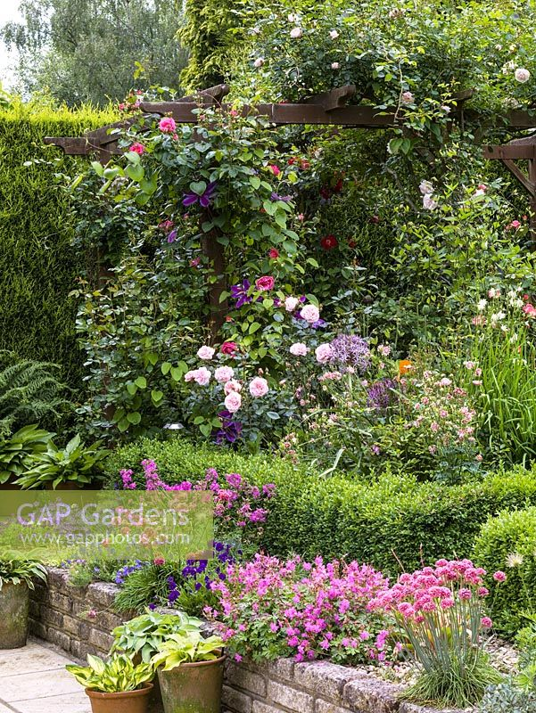 Gap gardens wood pergola and planting of rosa morning jewel wood pergola and planting of rosa morning jewel clematis the president rosa new dawn mightylinksfo