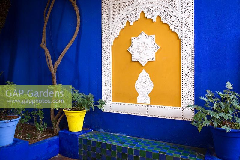 Jardin majorelle yves saint laurent garden philodendron xanadu in blue and yellow container with