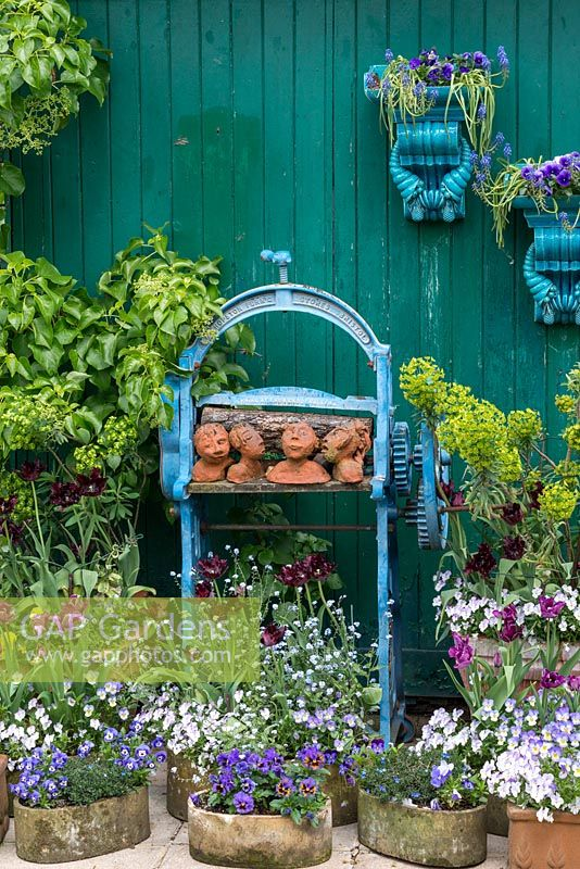 Clay heads on an old iron mangle painted blue forms a focal point in an arrangement of pots of violas, forget-me-nots and euphorbia, Tulipa 'Black Parrot' and 'Blue Parrot'.