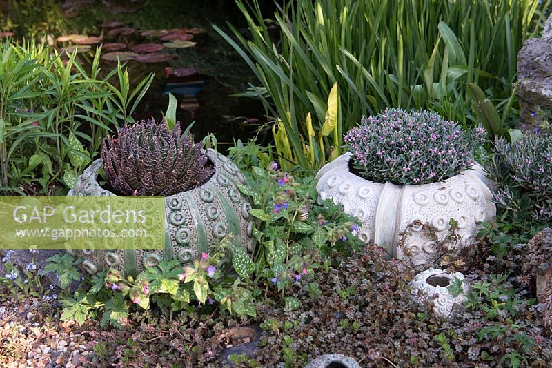 Pair of pots by ceramicist Susan Bennett, inspired by sea urchins. Right pot planted with Andromeda polifolia Compacta - bog rosemary. Left pot planted with Aloe.