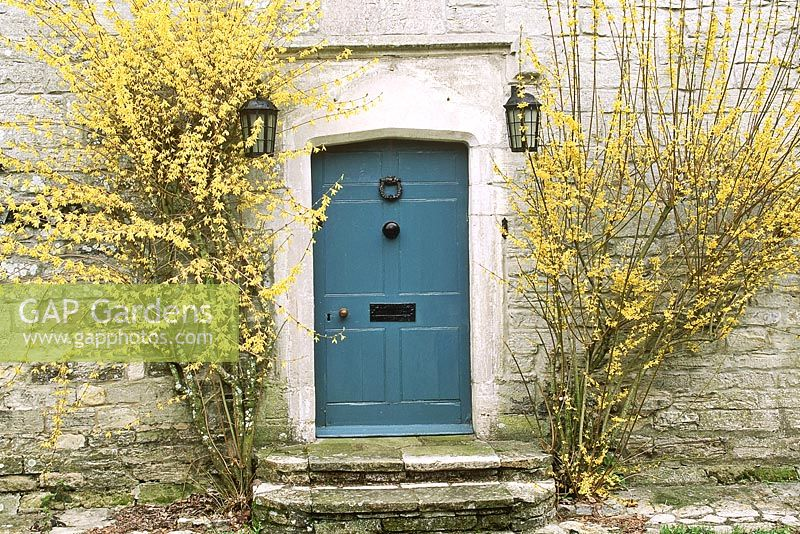 Gap Gardens Country House Forsythia Flowering Either Side Of