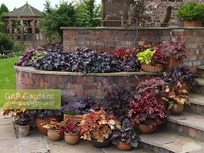 Heuchera display. Wall bed with Blackberry Jam, Peach Flambe. Basket with Lime Marmalade, Fire Chief. Pots planted with Caramel, Midnight Bayou, Dark Secret, Obsidian, Mahogany and Heucherella Brass Lantern.