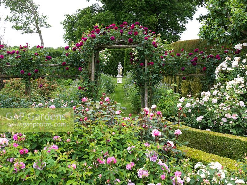 Shrub Rose Garden leading to Spring Garden under arch clad in Rosa Falstaff. Seen over roses The Countryman, Mary Magdalene, Miss Alice, Brother Cadfael, Jaques Cartier.