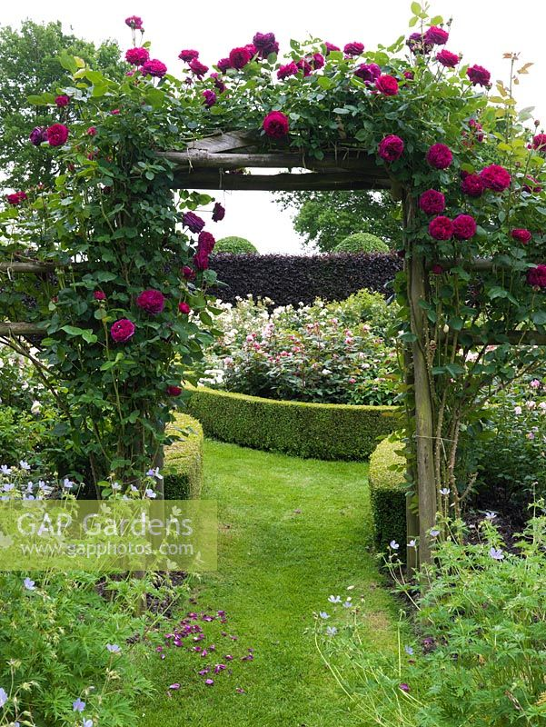 Arch clad in Rosa Falstaff leads from Spring to Shrub Rose gardens, spanning a grass path.