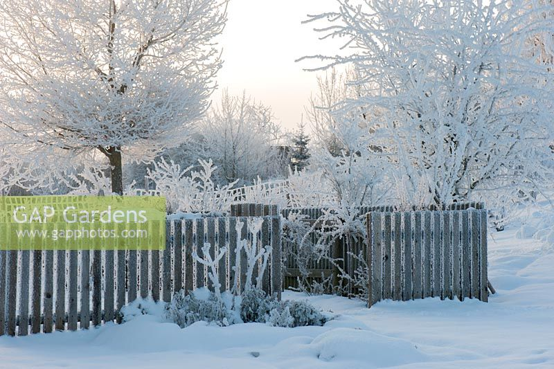 Wooden fence in a snowy garden. Trees covered by hoarfrost