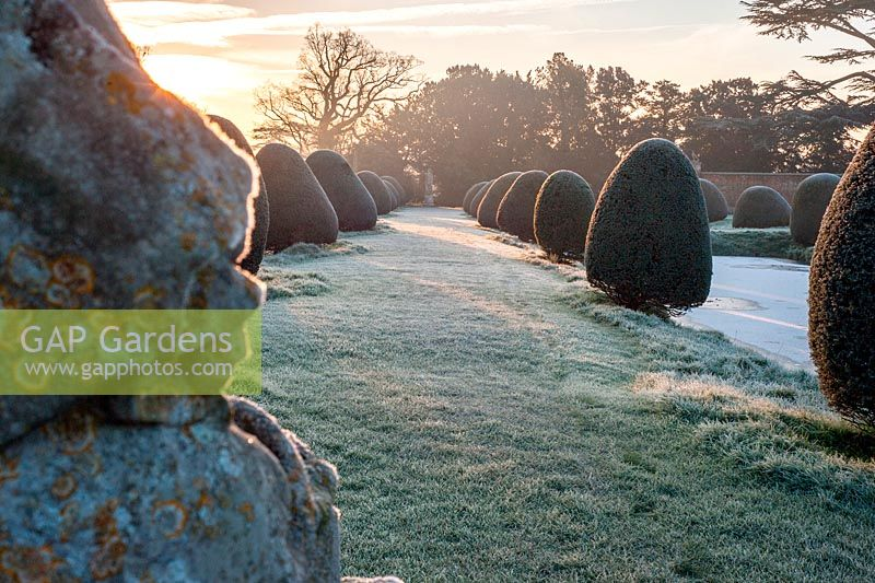 Moat and topiary with frost. Helmingham Hall, Suffolk