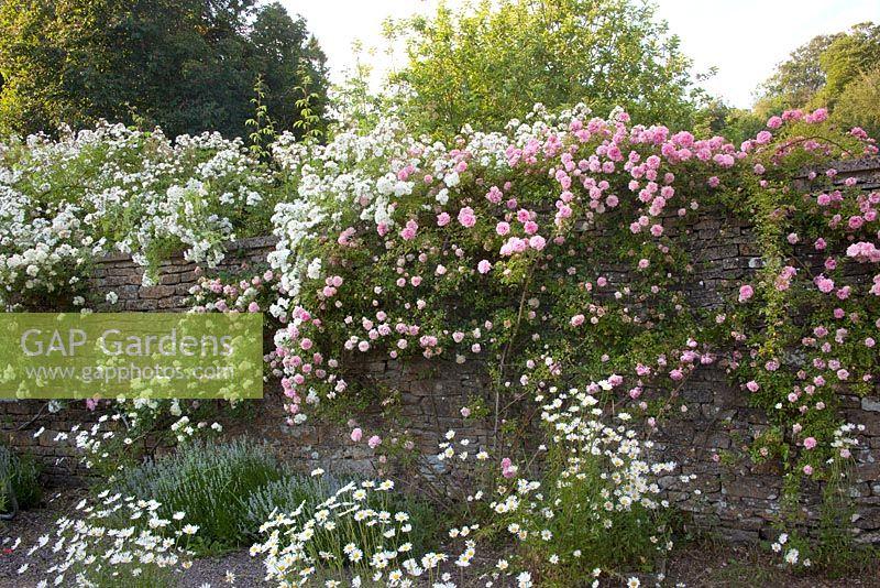 gap gardens rosa paul transon rosa paul noel and rosa. Black Bedroom Furniture Sets. Home Design Ideas
