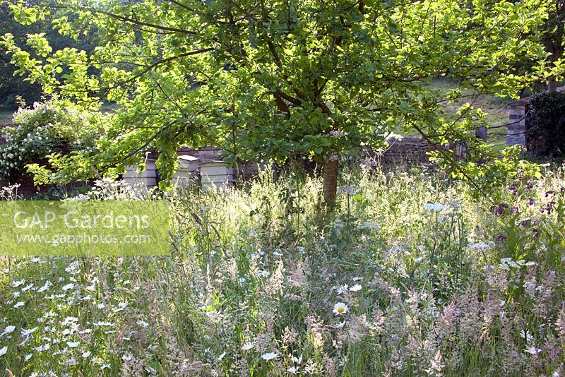 Gap gardens the orchard is underplanted with white meadow flowers the orchard is underplanted with white meadow flowers moorwood garden mightylinksfo