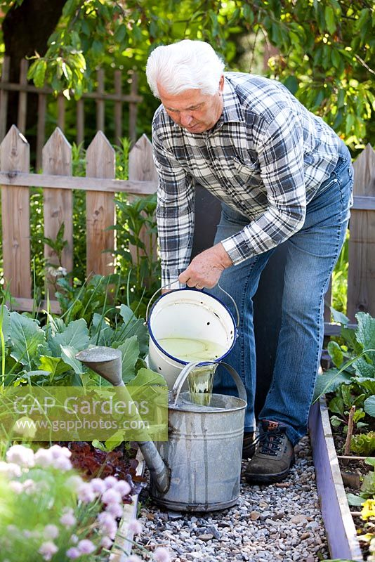 Man pouring home-made natural insecticide and fertiliser solution from bucket into watering can. The liquid is made from steeping nettles in water