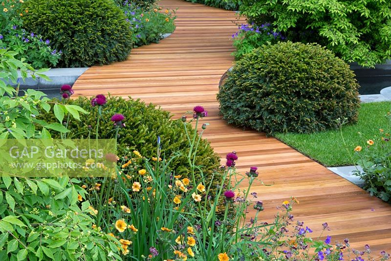 Attirant View Of The Cedar Walkway. Plants Include Taxus Baccata   Yew Balls, Geum U0027
