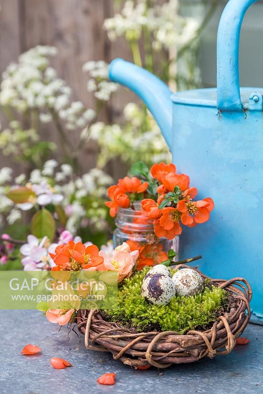 Quail eggs sat on moss within a woven willow wreath, accompanied with blossoming spring foliage and blue watering can