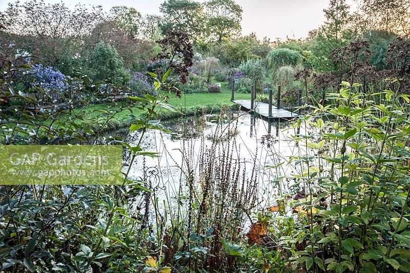Pond with waterlilies and jetty, with beds of late flowering perennials and grasses beyond including asters and chrysanthemums. Norwell Nurseries, Norwell, Notts, UK