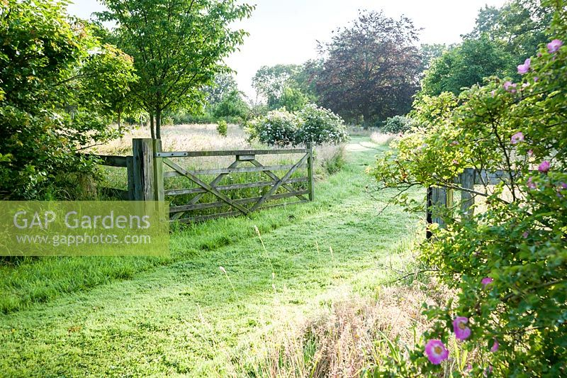 Wide Gateway Into Meadow With Mown Paths Leading Through Long Meadow, With  Mounds Of Flowering