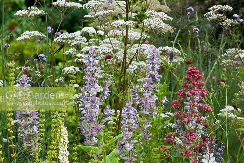 Mixed border perennials - wildlife bee and butterfly friendly planting