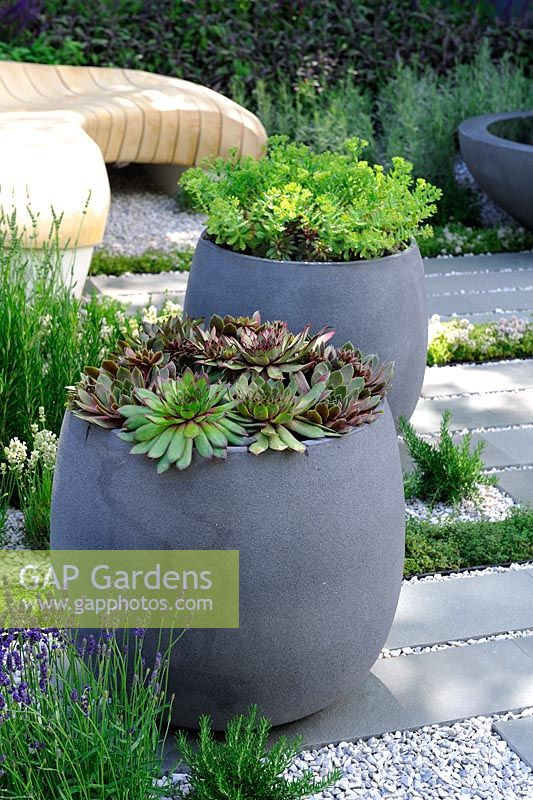 Grey containers planted with succulents - Living Landscapes: Healing Urban Garden, RHS Hampton Court Palace Flower Show 2015